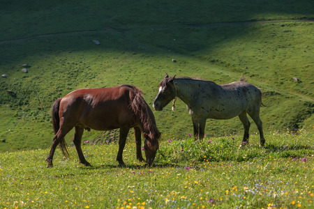 two horse in high mountains photo