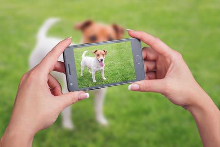 taking video: jack russel on green lawn