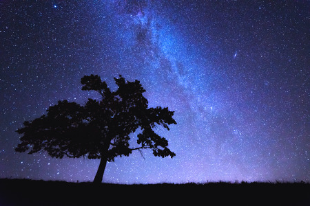 alone tree and milky way 版權商用圖片 - 32815985