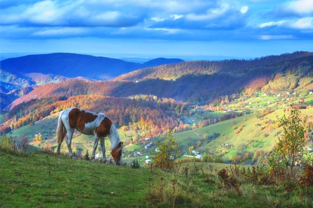 brown horse in mountain hill photo