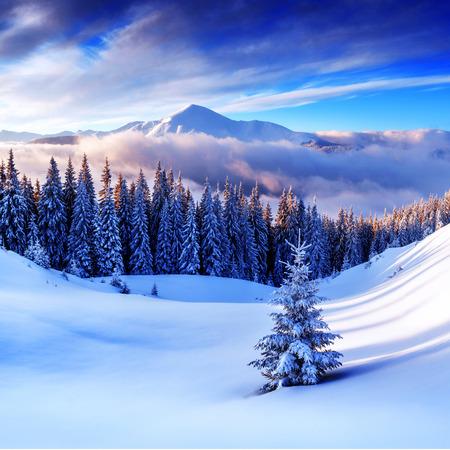冬の山に snovy 木