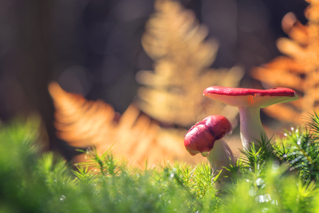 mushroom in forest close up photo