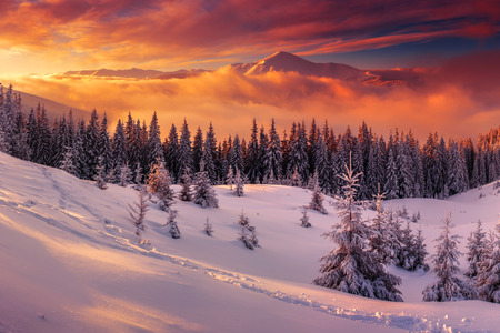 겨울 산에 snovy trees