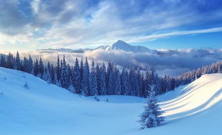 Alberi snovy sulla montagna invernale Archivio Fotografico - 36364626