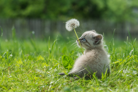 fluffy ears: kitten on grass close up