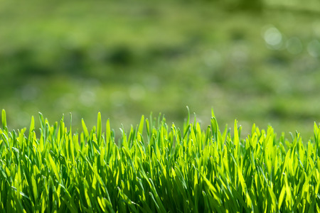 blades: green grass on green background