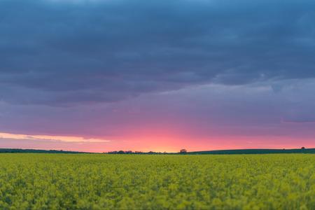 oilseed rape: yellow rape field and clouds Stock Photo