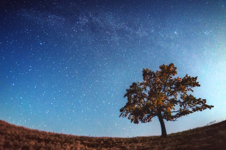 alone in the dark: alone tree and milky way