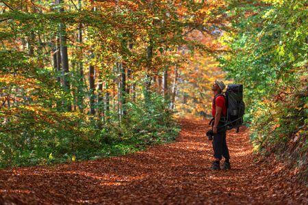 backpacks: orange forest on autumn season