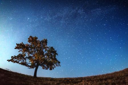 tree silhouette: The Milky Way over the alone tree silhouette. Carpathian, Ukraine, Europe. Stock Photo