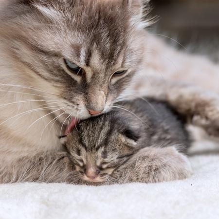 母と小さな子猫をクローズ アップ 写真素材
