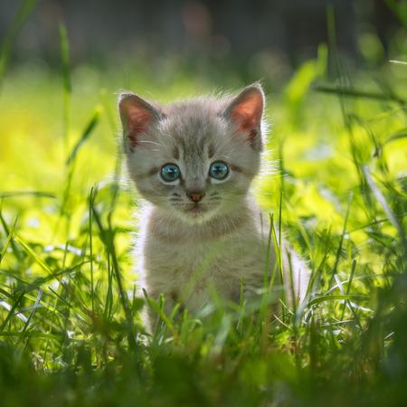 芝生の上の子猫をクローズ アップ