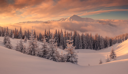 Fantastic orange evening landscape glowing by sunlight. Dramatic wintry scene with snowy trees. Kukul ridge, Carpathians, Ukraine, Europe. Merry Christmas! Stockfoto