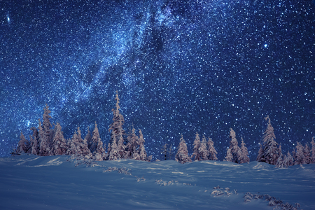 snow and trees: winter forest and milky way Stock Photo