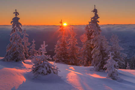 nature of sunlight: Fantastic orange evening landscape glowing by sunlight. Dramatic wintry scene with snowy trees. Kukul ridge, Carpathians, Ukraine, Europe. Merry Christmas! Stock Photo
