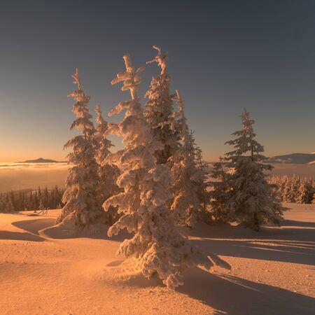 pine forest: Fantastic orange evening landscape glowing by sunlight. Dramatic wintry scene with snowy trees. Kukul ridge, Carpathians, Ukraine, Europe. Merry Christmas! Stock Photo