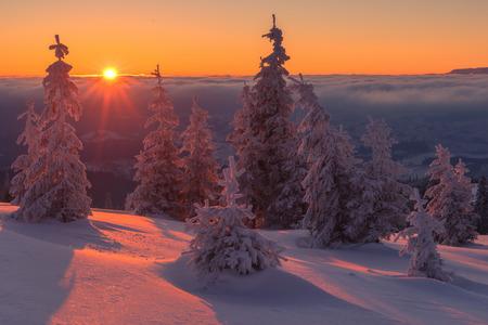 christmas fir: Fantastic orange evening landscape glowing by sunlight. Dramatic wintry scene with snowy trees. Kukul ridge, Carpathians, Ukraine, Europe. Merry Christmas! Stock Photo