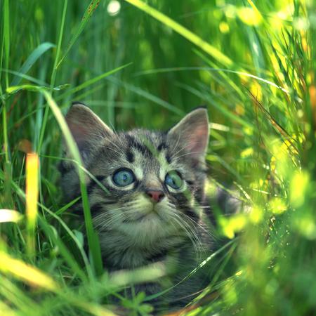 cute kittens: kitten on grass close up