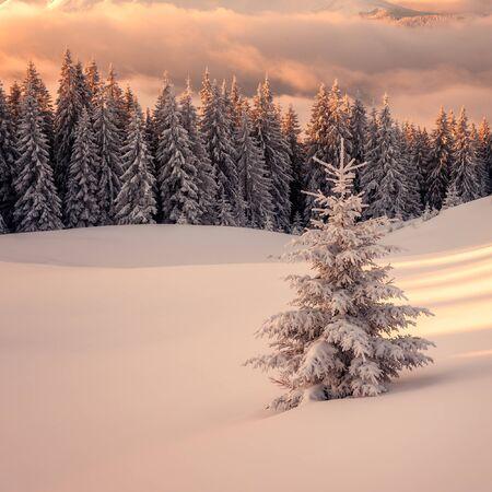 Fantástico paisaje de la tarde de color naranja brillante por la luz solar. dramática escena invernal con árboles nevados. Cárpatos, Ucrania, Europa.