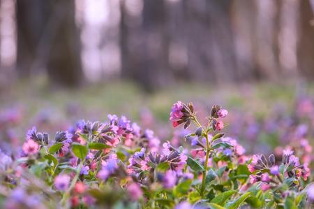 armonia: flowers on spring field closeup Foto de archivo