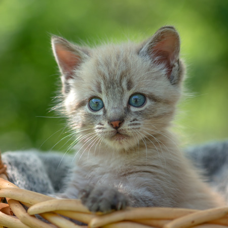cute kittens: kitten on basket close up