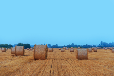 roles: Amazing rural scene on autumn field with straw roles Stock Photo