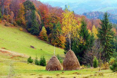 haystack: two haystack near autumn forest