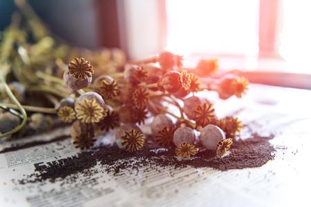 bolls: dried poppy bolls close up