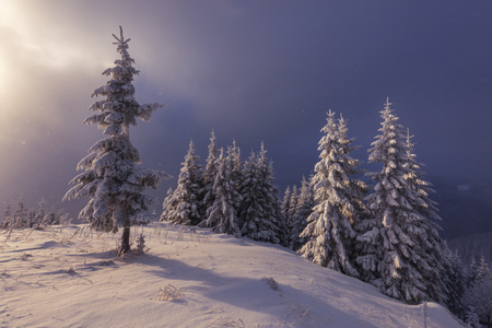 Fantastic winter landscape. Carpathians, Ukraine, Europe.