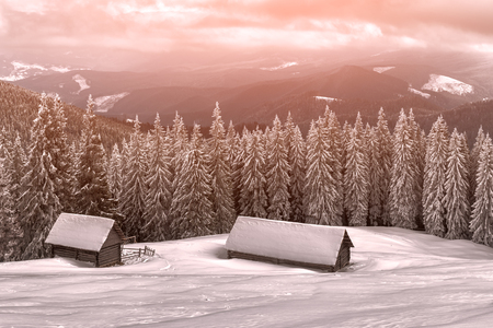 snow forest: wooden house in winter forest