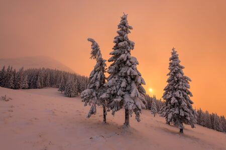 Fantastic orange evening landscape glowing by sunlight. Dramatic wintry scene with snowy trees. Carpathians, Ukraine, Europe. Merry Christmas!