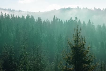 동화 전나무 나무 숲 스톡 콘텐츠