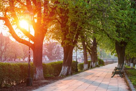 Die längste in Europa linden Gasse in Uzhhorod Stadt. Zartes grünes Laub des frühen Frühlings Ukraine, Europa