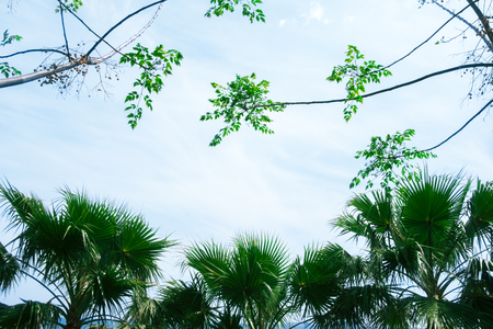 Palm tree silhouettes on blue sky background. Amazing summer scene on Mediterranean seacost