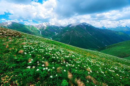 Amazing white flowers on summer mountain. Dramatic sky and colorful sunset Lizenzfreie Bilder