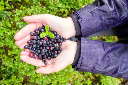 Blueberry in girl hands Lizenzfreie Bilder