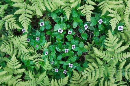 Fern leaves and small white flowers