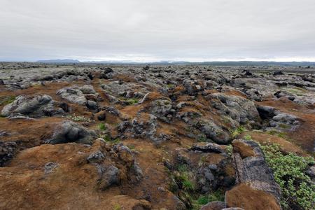Moss field in Iceland Lizenzfreie Bilder
