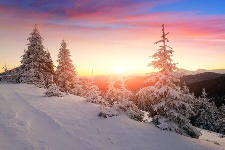 Dramatic wintry scene with snowy trees. Standard-Bild