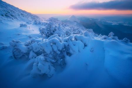 Drastische winterliche Szene mit schneebedeckten Bäumen.