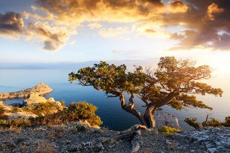 Allein Baum am Rande der Klippe