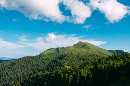 Picturesque summer landscape in sunny day in Carpathian mountains. Lush green forest from pine tree on backgound. Travel background concept
