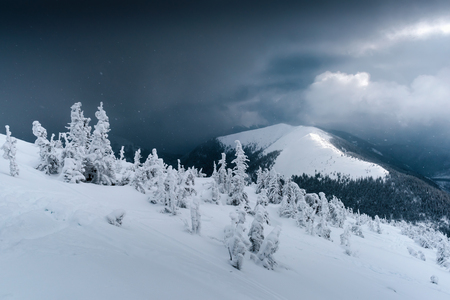 Fantastic winter landscape with snowy trees. Drammatic sky and icy mountain peak. Carpathian mountains, Ukraine, Europe. Christmas holiday concept