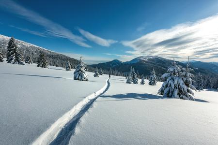 Fantastic winter landscape with snowy trees. Carpathians, Ukraine, Europe Standard-Bild