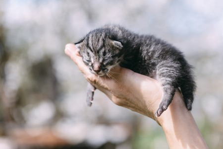 Newborn kitten in hands outdors. Animal photography