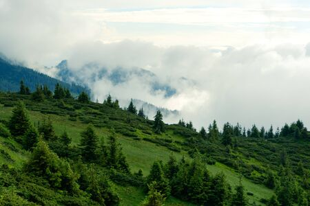 Picturesque summer landscape in foggy day in Carpathian mountains. Lush green forest from pine tree on backgound. Travel background concept Standard-Bild