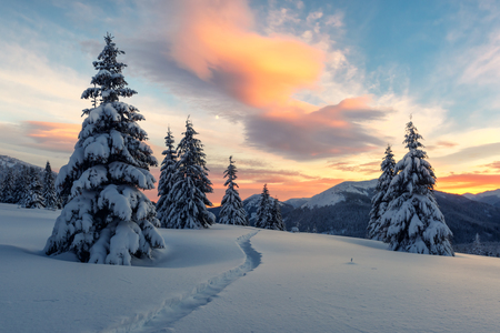 Fantastic orange winter landscape in snowy mountains glowing by sunlight. Dramatic wintry scene with snowy trees. Christmas holiday concept. Carpathians mountain Standard-Bild