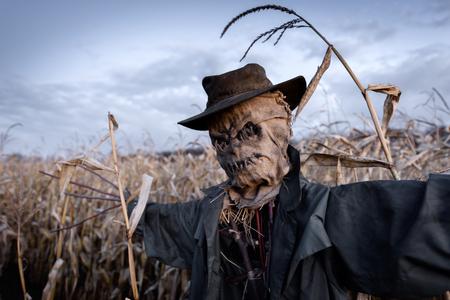 Furchterregende Vogelscheuche in einem Hut auf einem Getreidefeld im Hintergrund des bewölkten Himmels. Halloween-Feiertagskonzept