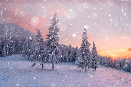 Fantastic orange winter landscape in snowy mountains glowing by sunlight. 版權商用圖片