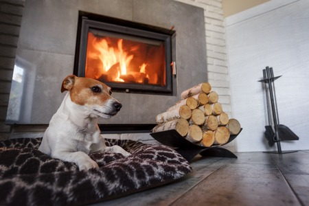 Jack russell terrier sleeping on a white rug near the burning fireplace. Resting dog. Hygge concept Standard-Bild
